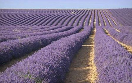 Valensole il y a 5jourd